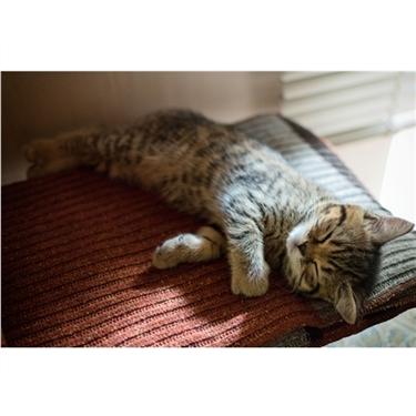 Cats and Sleep