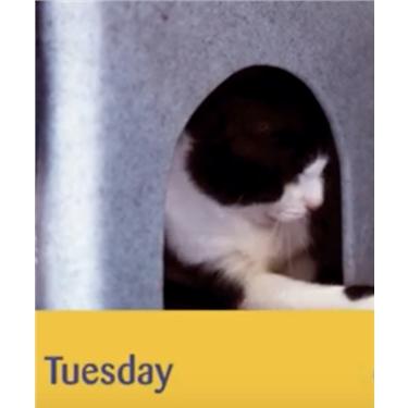 Meet Tuesday - video