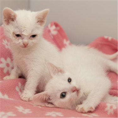 Two critically ill kittens illustrate the dangers of buying online, warns cat charity