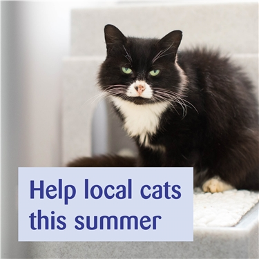 Summer Appeal 2021
