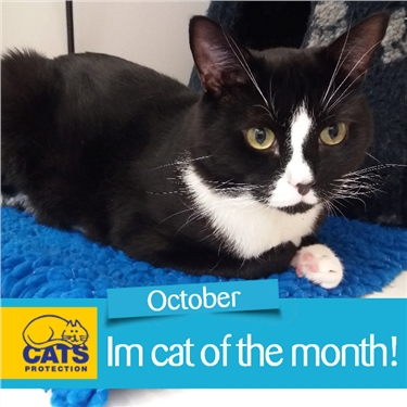 Cat of the month (October)- Eddie