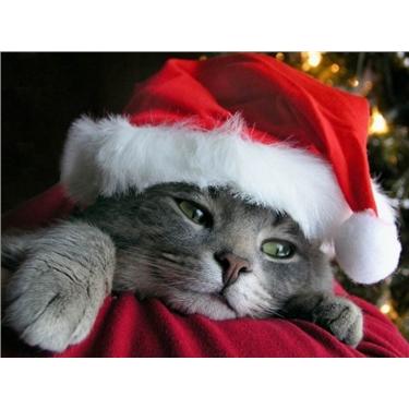 **COGGESHALL CHRISTMAS FAYRE 10/12/16**