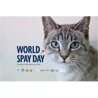 World Spay Day Update