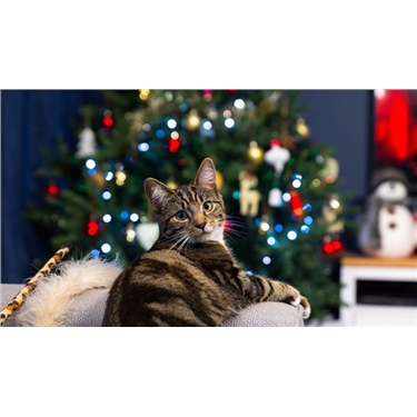 Keeping Your Cat Safe at Christmas
