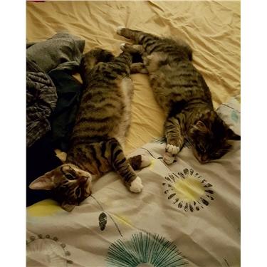 Alfie & Ivie