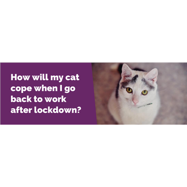 How Will my Cat Cope after Lockdown?