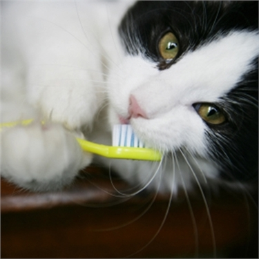 Has your cat got smelly breath?