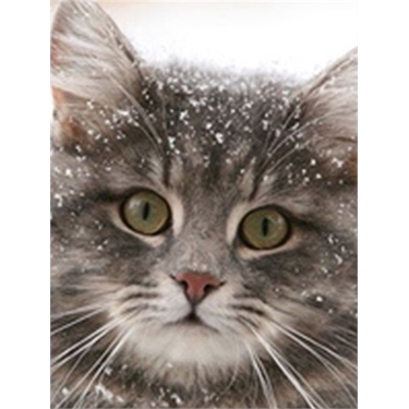 Cold weather tips for cats