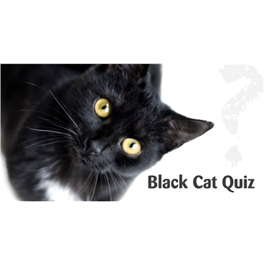 Join our Black Cat virtual quiz!