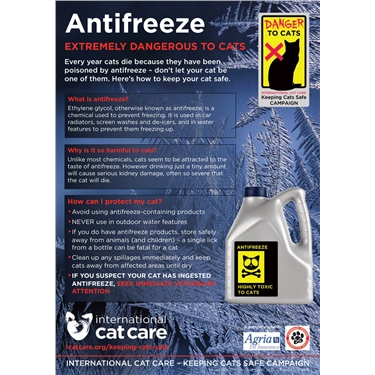 Antifreeze Danger: Warning to Cats Owners