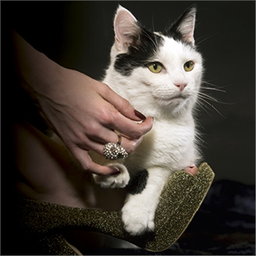 Who will be the top cat in the UK from these fabulous 15 felines?