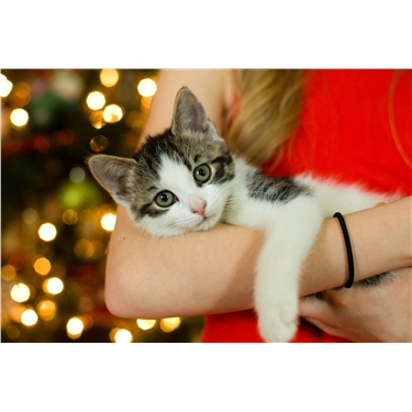 Keep Your Cat Safe this Christmas