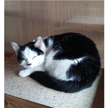 Update on the cat found on the M27 at Eastleigh
