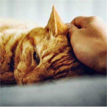 Covid-19 & Cats