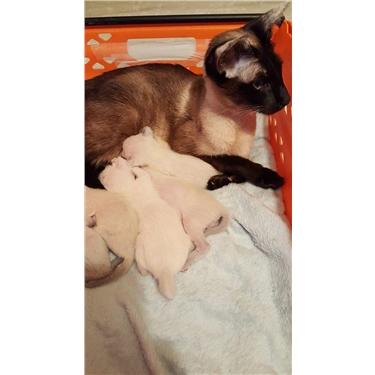 MISSING CAT - Nellie