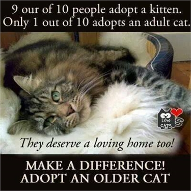 Adopting an older cat
