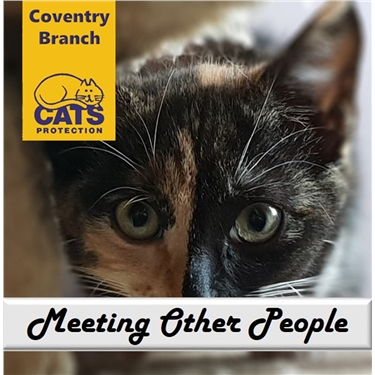 Cat Care: Meeting New People