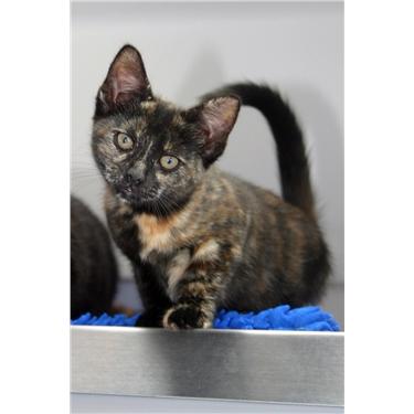 Urgent appeal for kitten fosterers