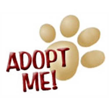 **SPECIAL INDOOR HOME NEEDED FOR L.J**
