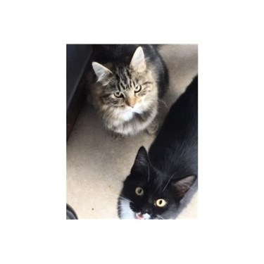 Featured Cats of the Week - Cookie & Ivy