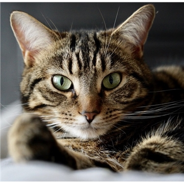 FAQs about coronavirus (COVID-19) and cats