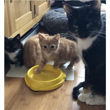 Sansas Kittens