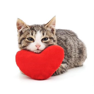 10 reasons why your cat is the ultimate Valentine