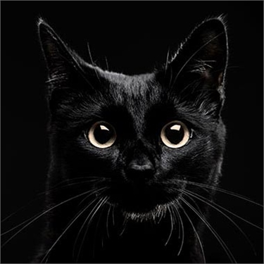 How will you support National Black Cat Day?