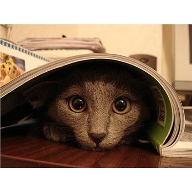 Adopting a shy cat...