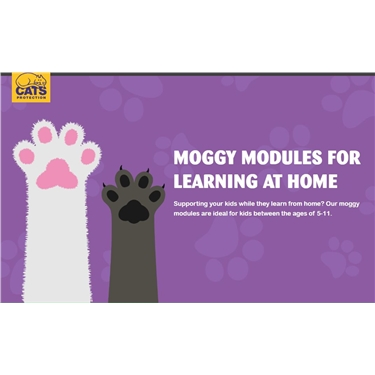 Moggy Learning Modules for Children!
