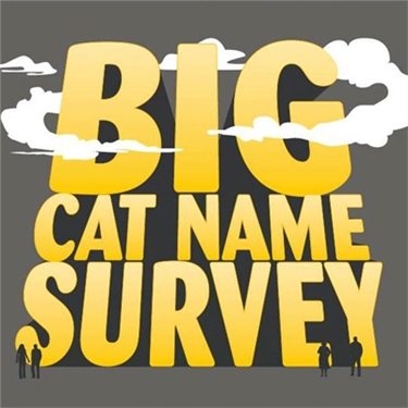 BIG cat name survey