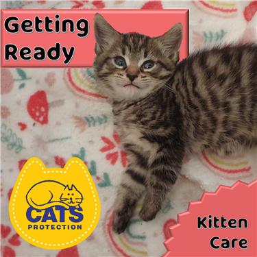 Kitten Care: Getting Ready