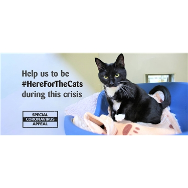 Will you help the Anglia Coastal branch be #HereforTheCats?