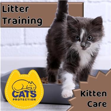 Kitten Care: Litter Training