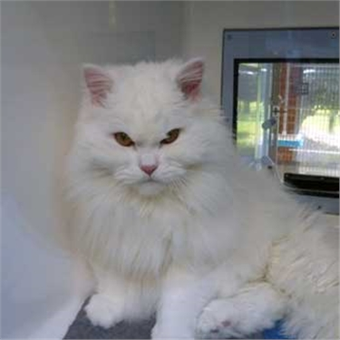 Deaf cat in desperate need of a home
