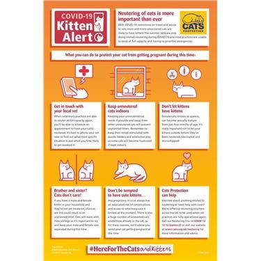 Cats Protection COVID-19 Kitten Alert