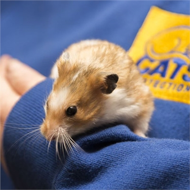 Hamster rescued at Bridgend Adoption Centre