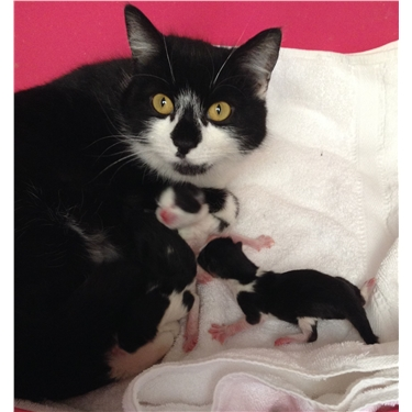 Mummy and Kittens