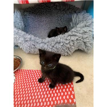 Kitten food plea
