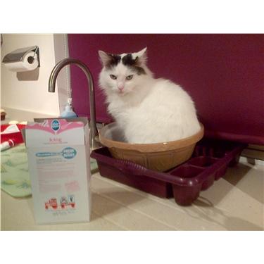 Waitrose in Frimley - Cat Protection chosen for June