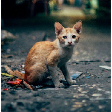Declare your support for cats: International Declaration of Responsibilities to Cats