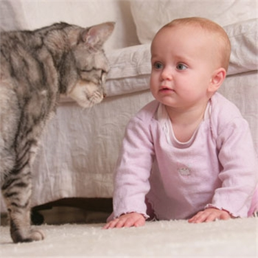 Baby love: kids and kitties campaign launched