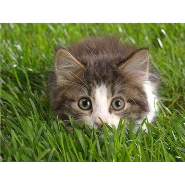 Cats Protection Volunteer Recruitment West England, Wales & NI