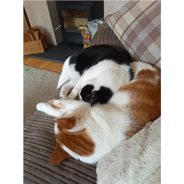 Gizmo and Max's Hands Free Homing story