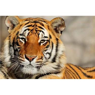 Himalaya Trek and Tiger conservation experience 2018