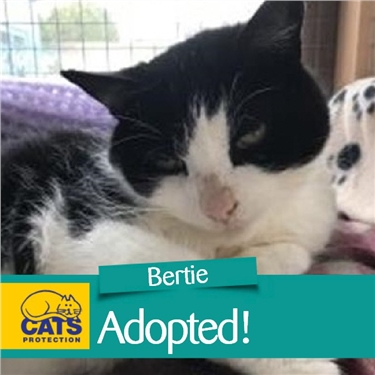 New home for Bertie