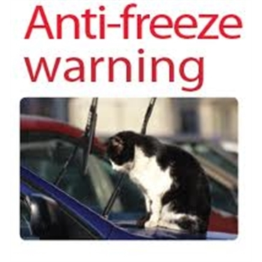 The danger of antifreeze