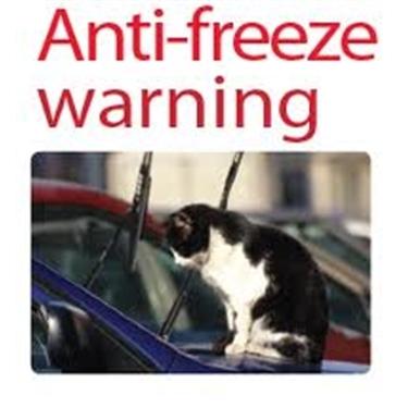 The danger of antifreeze