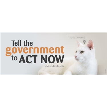 Government Consultation on Compulsory Cat Microchipping