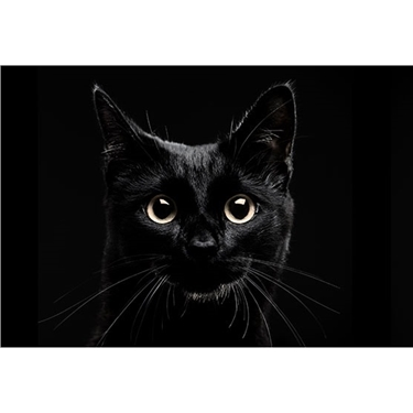 National Black Cat Day - Tuesday 27th October 2015